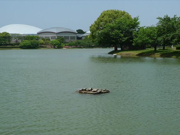 亀の楽園 in 駕与丁公園