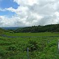 写真: 扇田(1)