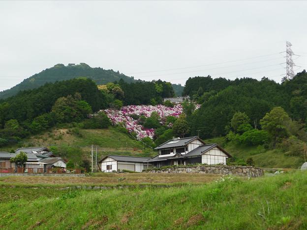 写真: 基山町?のつつじ(1)
