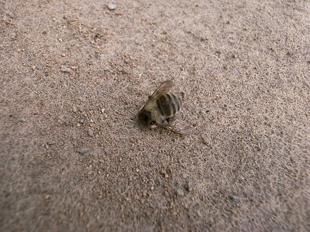 蜂も死んだ