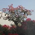 写真: IMG_96092010台北花博_FLORA_EXPO