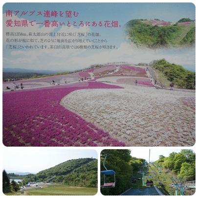 20120528 茶臼山高原 芝桜