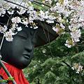 Photos: 地蔵と桜