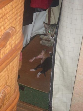 母猫、不安そうな表情(-_-)