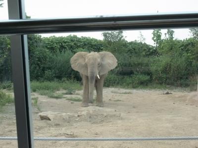 ゾウさんお怒り
