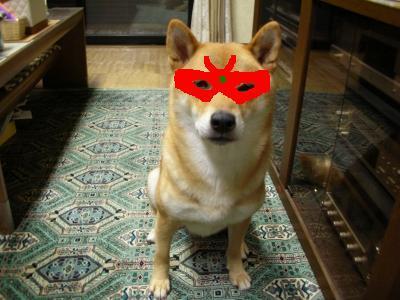 ♪ 赤い仮面は~謎の犬~♪・・・  赤柴参上!!