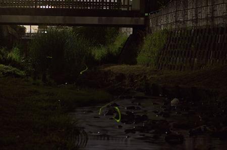 宝来橋のホタル 04