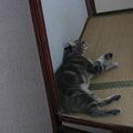 Photos: 寛ぐネコ君♪