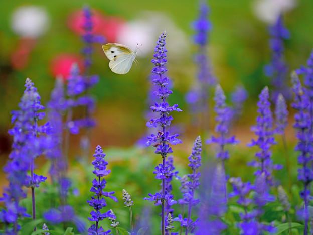 花の香りに誘われて ~Invited by the scent of a flower~