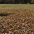 落ち葉のジュウタン1